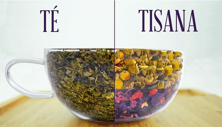 diferencia entre te e infusion y tisana